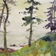 Spruce Trees_16x12_Watercolor